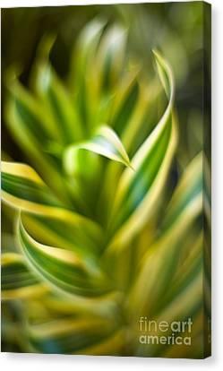 Tropical Swirl Canvas Print by Mike Reid