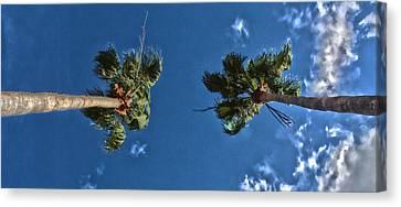 Tropical Twins Canvas Print by Nicholas Evans