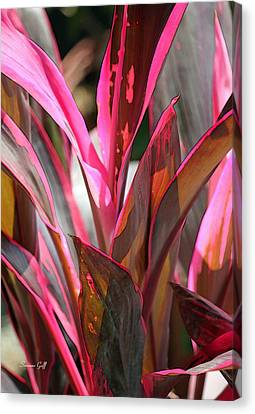 Tropical Vision Canvas Print by Suzanne Gaff