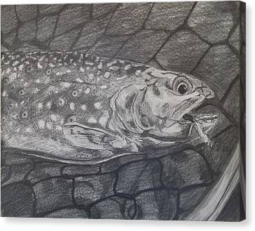 Trout In Net Canvas Print by Michelle Grove