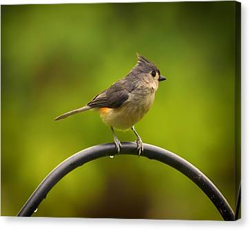 Tufted Titmouse On Pole Canvas Print by Bill Tiepelman