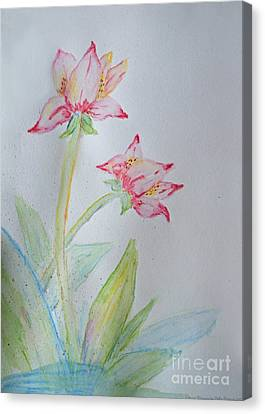 Tulip Duo I  Canvas Print by Debbie Portwood