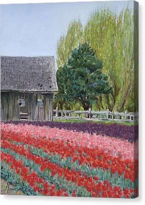 Tulip Season Canvas Print by Marie-Claire Dole