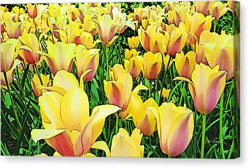 Tulips In New York  Canvas Print by Russ Harris