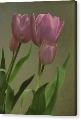 Tulips Reflections Canvas Print by Debra     Vatalaro