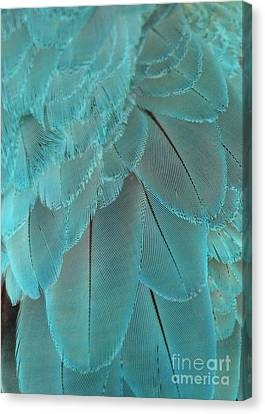 Turquoise Feathers Canvas Print by Sabrina L Ryan