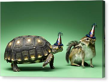 Turtle And Chipmunk Wearing Party Hats Canvas Print by Jeffrey Hamilton