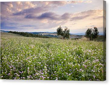 Tuscany Flowers Canvas Print by Brian Jannsen