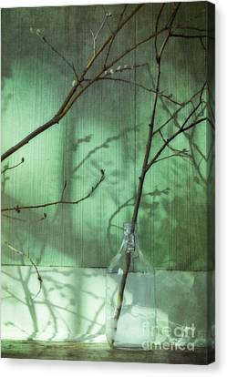 Twigs Shadows And An Empty Beer Jug Canvas Print by Priska Wettstein