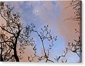 Twilight Canvas Print by Felix Zapata