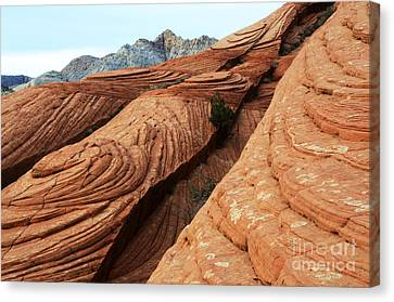 Twisted Landscape Canvas Print by Bob Christopher