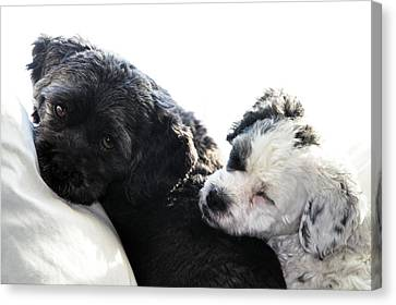 Two Cute Canvas Print by Larry Ricker