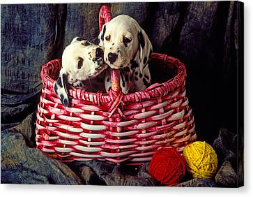 Two Dalmatian Puppies Canvas Print by Garry Gay