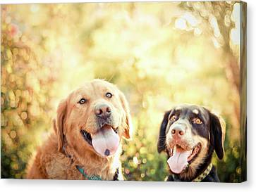 Two Dogs Canvas Print by Jessica Trinh