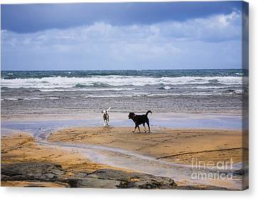 Two Dogs Playing On The Beach Canvas Print by Kathleen Smith