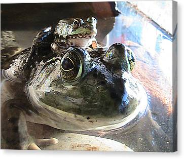 Two Frogs Canvas Print by Rachel Snell