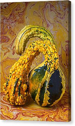 Two Gourds Canvas Print by Garry Gay