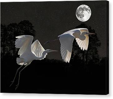 Two Great Egrets  Canvas Print by Eric Kempson