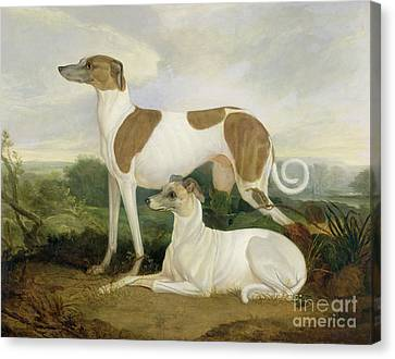 Two Greyhounds In A Landscape Canvas Print by Charles Hancock