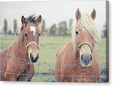 Two Horses Behind A Wired Fence Canvas Print by Cindy Prins