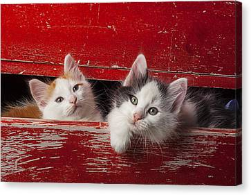 Two Kittens In Red Drawer Canvas Print by Garry Gay