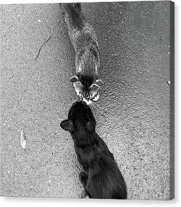 Two Kittens Which Kiss Canvas Print by photographer, loves art, lives in Kyoto