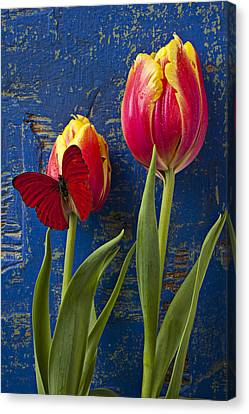 Two Tulips With Red Butterfly Canvas Print by Garry Gay