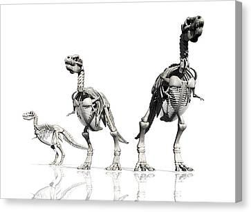 Tyrannosaurus Rex Skeletons, Artwork Canvas Print by Victor Habbick Visions
