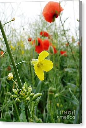 Under The Morning Dew Canvas Print by AmaS Art