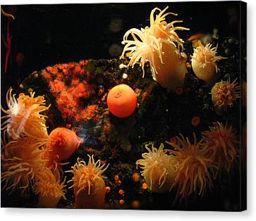 Under The Sea Canvas Print by Cat Reynolds