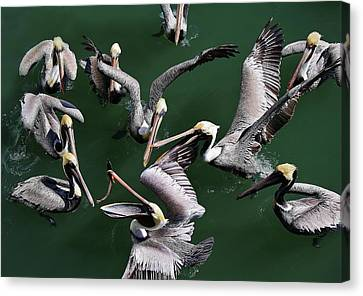 Up In The Air Canvas Print by Paulette Thomas