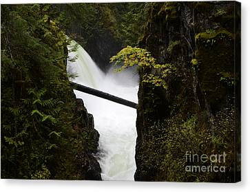Upper Qualicum Falls Canvas Print by Bob Christopher