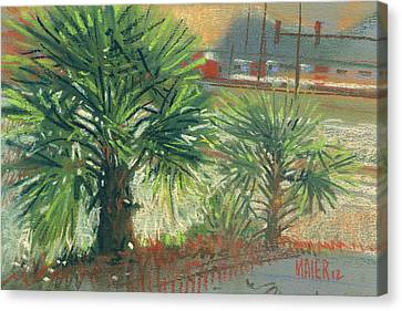Urban Palms Canvas Print by Donald Maier