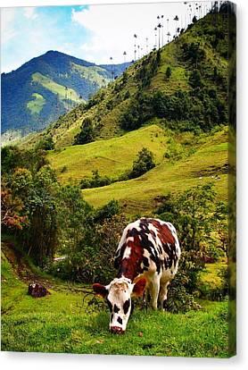 Vaca Canvas Print by Skip Hunt