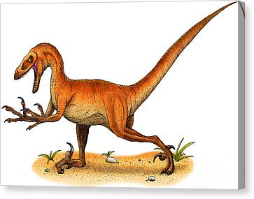 Velociraptor Canvas Print by Roger Hall and Photo Researchers
