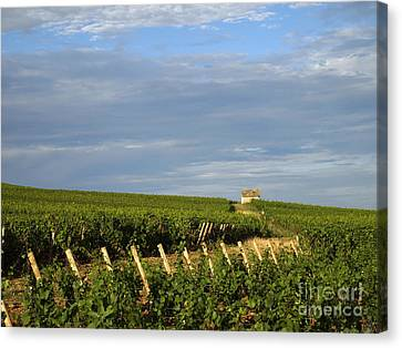 Vines In Burgundy. France Canvas Print by Bernard Jaubert