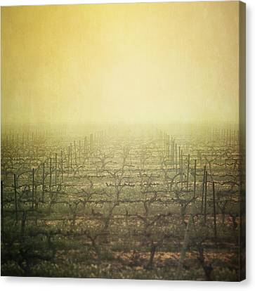 Vineyard In Mist Canvas Print by Paul Grand Image