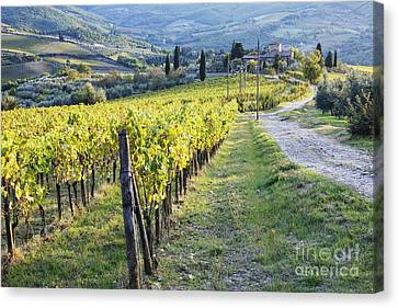 Vineyards And Farmhouse Canvas Print by Jeremy Woodhouse