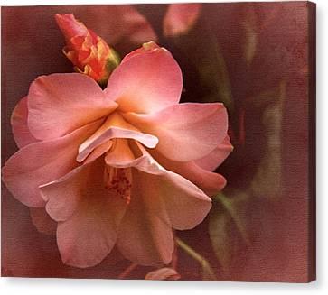 Vintage Camellia No. 1 Canvas Print by Richard Cummings