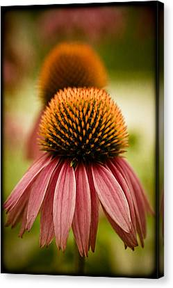 Vintage Flower Canvas Print by Jen Morrison