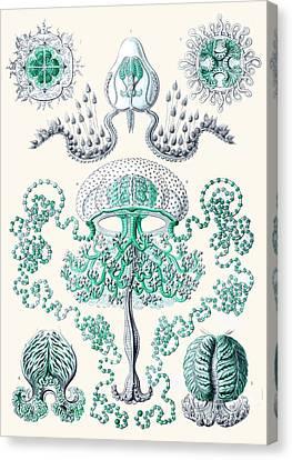 Vintage Jellyfish Canvas Print by Patruschka Hetterschij