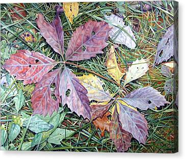Virginia Creeper Canvas Print by - Harlan
