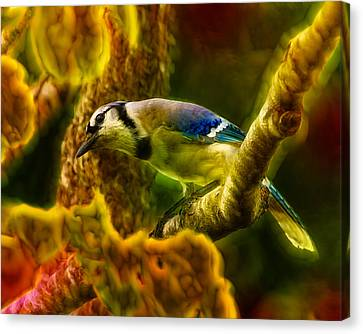 Visions Of A Blue Jay Canvas Print by Bill Tiepelman