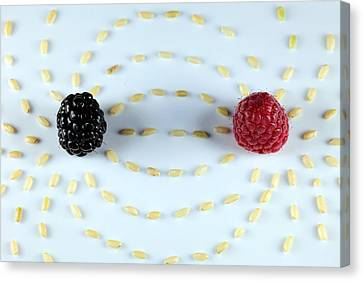 Vitalberry And Raspberry Depicting Magnetic Field Line Canvas Print by Paul Ge