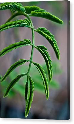 Vivid Plant Canvas Print by Erik Hovind