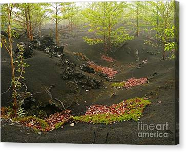 Volcanic Scenery Canvas Print by Bernard MICHEL