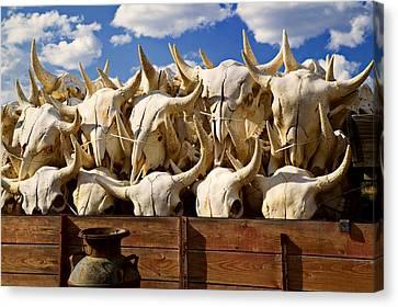 Wagon Full Of Animal Skulls Canvas Print by Garry Gay