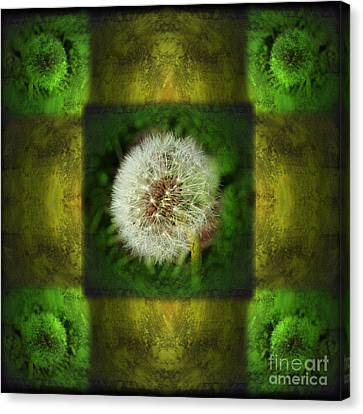 Waiting For A Wish Canvas Print by Laura Iverson