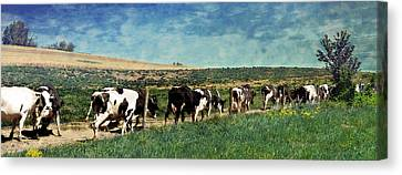 Waiting In Line Canvas Print by Kathy Jennings