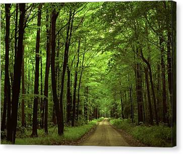 Walking Away Forest Path  Canvas Print by ilendra Vyas